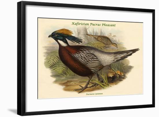 Pucrasia Castanea - Kafiristan Pucras Pheasant-John Gould-Framed Art Print