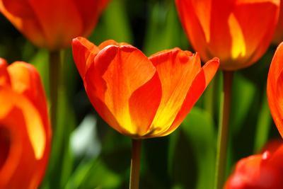 Spring Bling