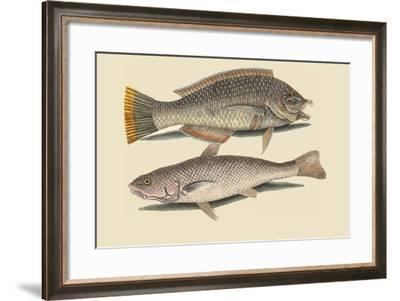 Pudding Wife Wrasse and Carolina Whiting-Mark Catesby-Framed Art Print