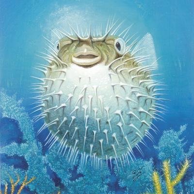 Puffer Fish-Durwood Coffey-Giclee Print