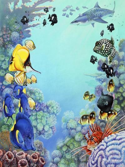 Puffer Reef-Tim Knepp-Giclee Print