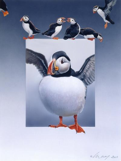 Puffins-Harro Maass-Giclee Print