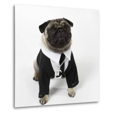 Pug Wearing Shirt, Tie and Necklace