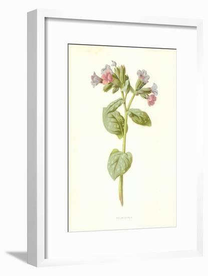 Pulmonaria-Frederick Edward Hulme-Framed Premium Giclee Print