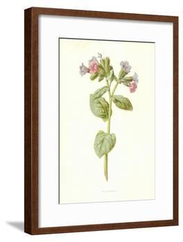 Pulmonaria-Frederick Edward Hulme-Framed Giclee Print