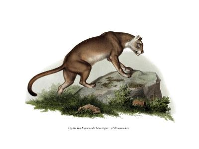Puma, 1860--Giclee Print