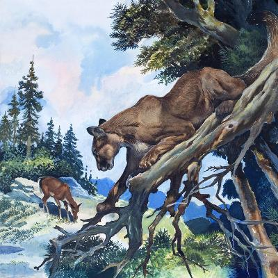 Puma on the Prowl, 1963-G^ W Backhouse-Giclee Print