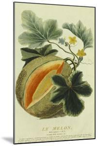 Pumpkin, 1787