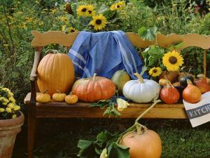 Pumpkin Still Life on Wooden Bench in Country Garden