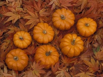 Pumpkins with Maple Leaves in Autumn, Washington, USA-Jamie & Judy Wild-Photographic Print