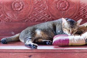 Sleeping Cat by pun483