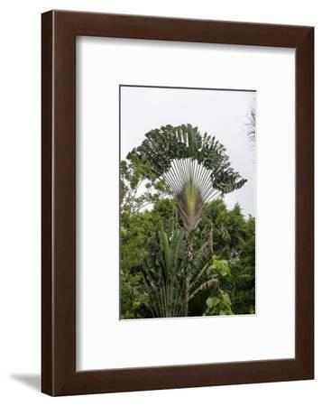 Puntarenas, Costa Rica-Peter Hawkins-Framed Photographic Print