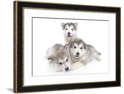 Puppies 002-Andrea Mascitti-Framed Photographic Print