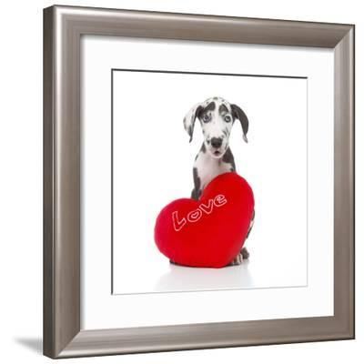 Puppies 029-Andrea Mascitti-Framed Photographic Print
