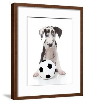 Puppies 036-Andrea Mascitti-Framed Photographic Print