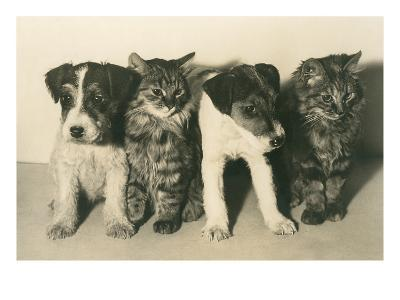 Puppies and Kittens--Art Print
