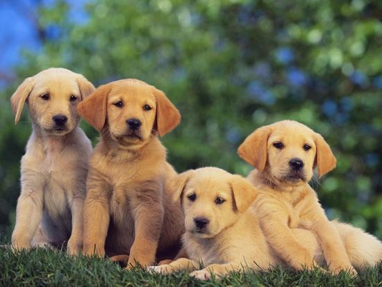Puppies--Photographic Print
