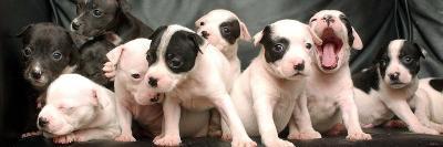 Puppy Love--Photographic Print