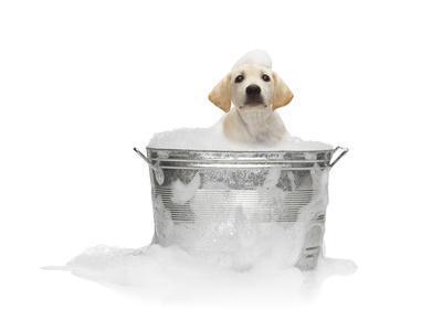 https://imgc.artprintimages.com/img/print/puppy-taking-bath_u-l-pzkwhu0.jpg?p=0