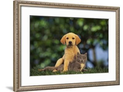Puppy with Kitten-DLILLC-Framed Photographic Print
