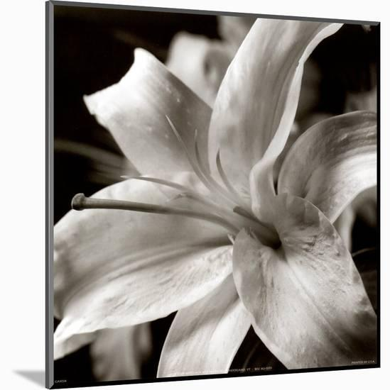 Pure Lily--Mounted Print