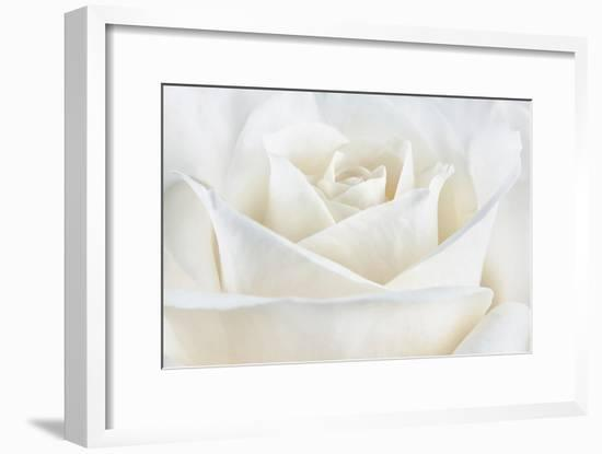 Pure White Rose-Cora Niele-Framed Photographic Print