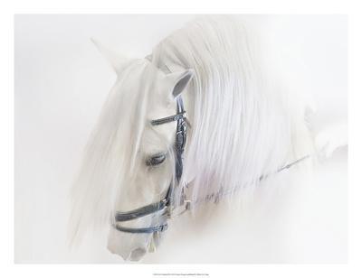 https://imgc.artprintimages.com/img/print/purebred-iii_u-l-f8mloj0.jpg?p=0