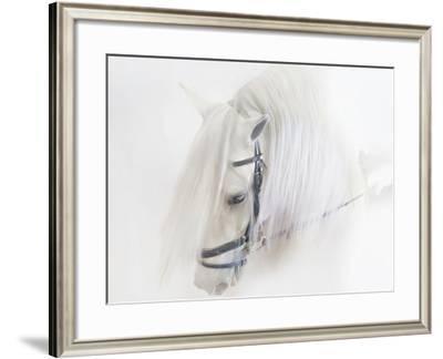 Purebred III-Ozana Sturgeon-Framed Photographic Print