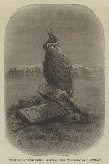 Purification (The Griffon Vulture), from The Bird--Giclee Print