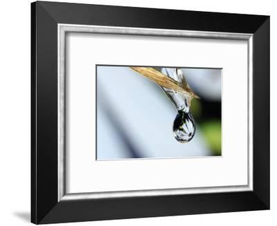 Purity Drop-Connie Publicover-Framed Art Print
