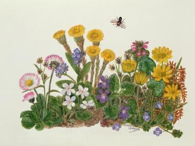 Purple and White Violets, Daisy, Celandine and Forget-Me-Not-Ursula Hodgson-Giclee Print