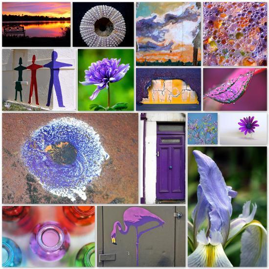 Purple Blossom Collage-Gail Peck-Photo