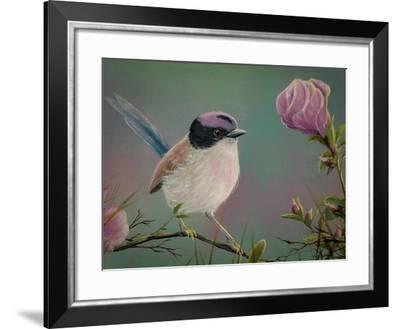 Purple Crowned Fairy Wren-Greg Farrugia-Framed Giclee Print
