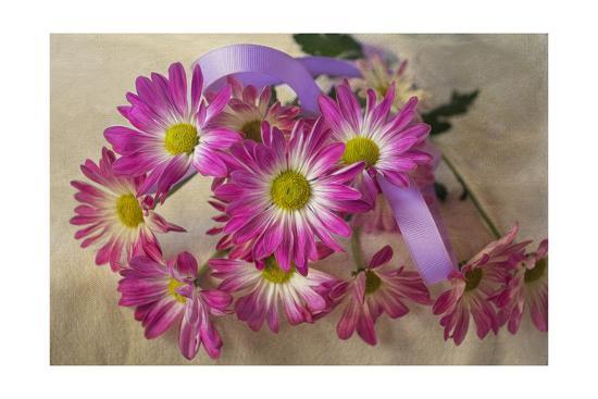 Purple Daisy Mums-Bob Rouse-Giclee Print
