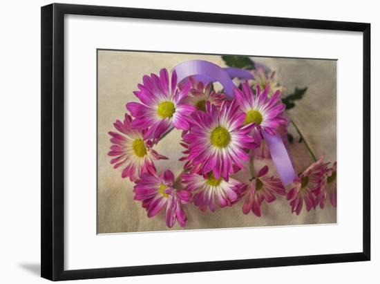 Purple Daisy Mums-Bob Rouse-Framed Giclee Print