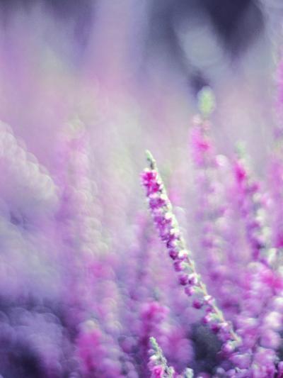 Purple Flower Bloom Nature-Wonderful Dream-Art Print
