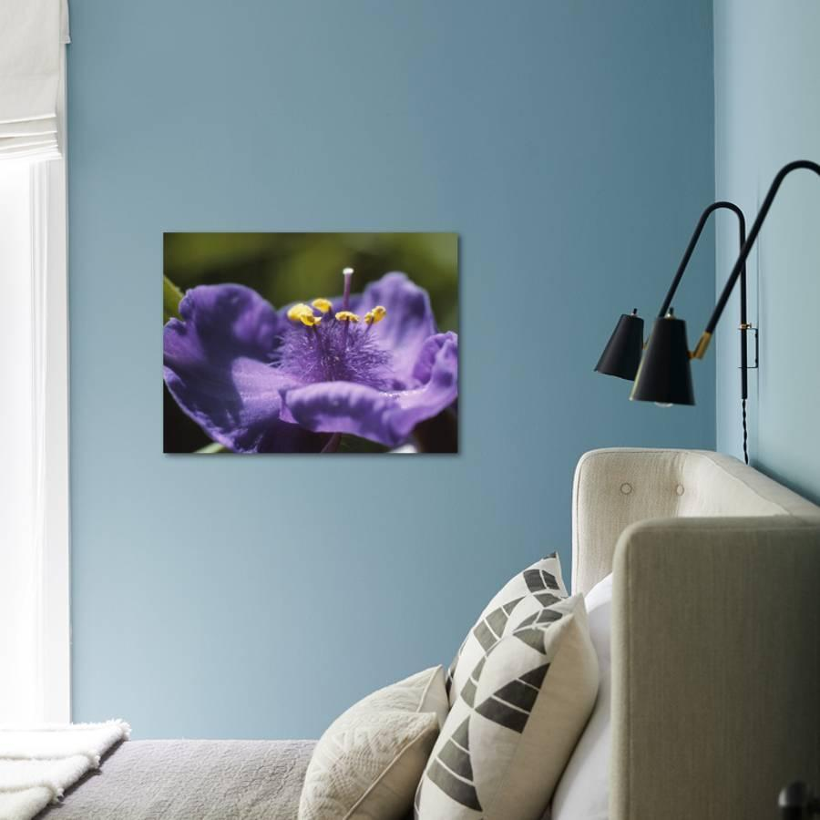 Purple Flower With Yellow Pollen And Stamen Photographic Print By