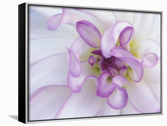 Purple Flower-Michele Westmorland-Framed Canvas Print