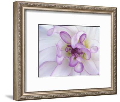Purple Flower-Michele Westmorland-Framed Photographic Print
