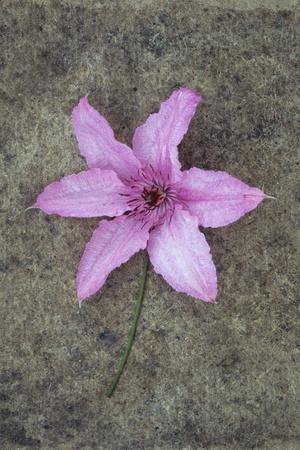 Purple Flower-Den Reader-Premium Photographic Print