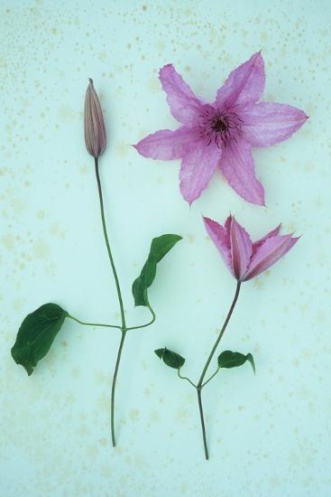 Purple Flower-Den Reader-Photographic Print