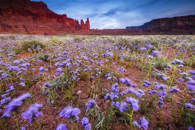 Purple Flowers Bloom, Early Spring, The Desert Eco-System Surrounding Fisher Towers Near Moab, Utah-Jay Goodrich-Photographic Print