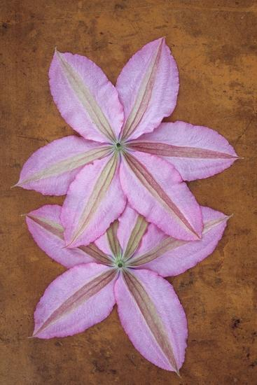 Purple Flowers-Den Reader-Photographic Print
