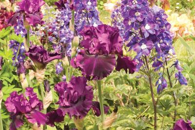https://imgc.artprintimages.com/img/print/purple-garden-i_u-l-q10pzse0.jpg?p=0