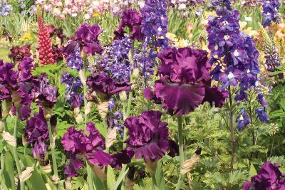 Purple Garden II-Maureen Love-Photographic Print