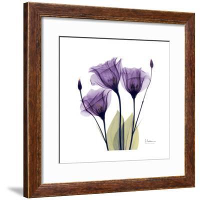 Purple Gentian Portrait-Albert Koetsier-Framed Art Print