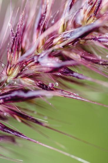 Purple Grasses II-Beth Wold-Photographic Print
