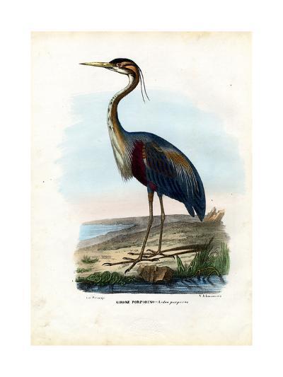 Purple Heron, 1863-79-Raimundo Petraroja-Giclee Print