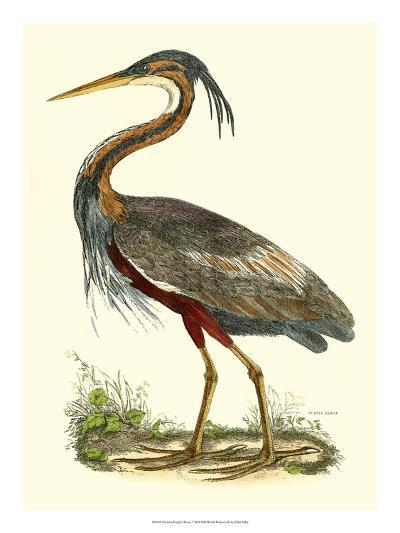 Purple Heron-John Selby-Giclee Print