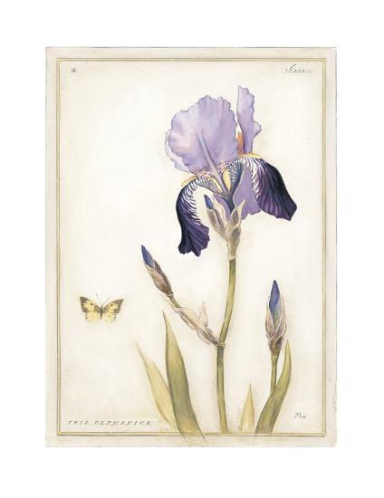 Purple Iris with Beard II-Meg Page-Art Print
